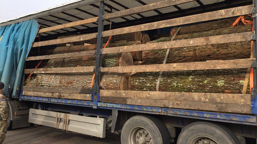 На Житомирщині намагались вивезти столітні дуби на півмільйона гривень