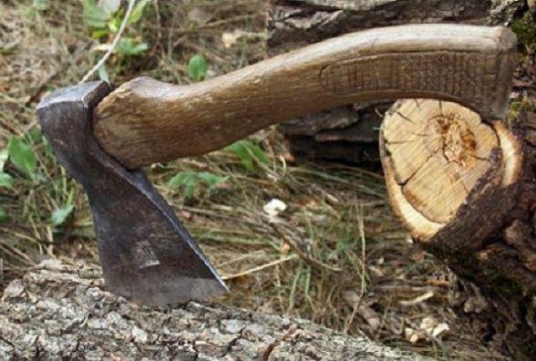 На Житомирщині невідомі зрубали 35 дубів