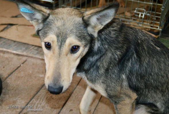 З тваринами по-людськи: як допомагають безпритульним псам у Житомирі