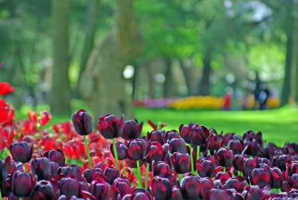Фести у березні: куди поїхати, щоб влаштувати казкове весілля та де дістати унікальні тюльпани