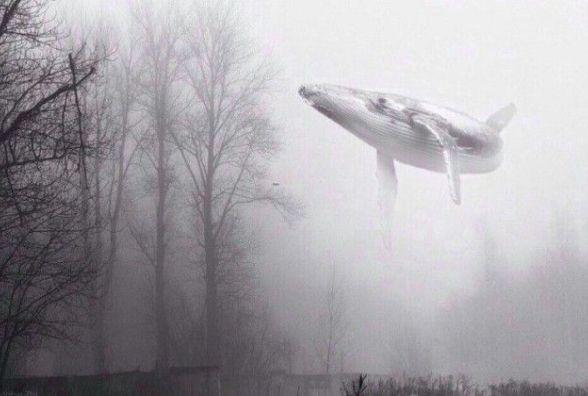 «Синій кит» – гра, що вбиває ваших дітей!