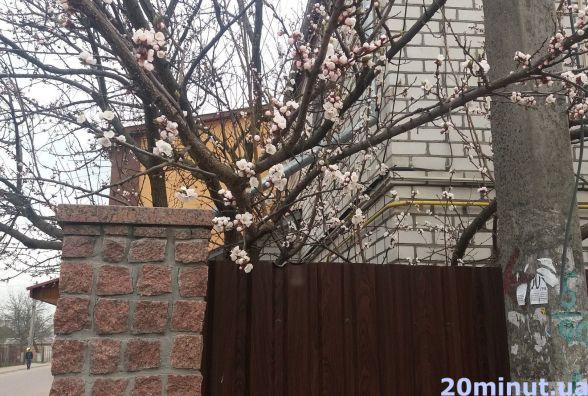 Фотофакт. У Житомирі почали розцвітати дерева
