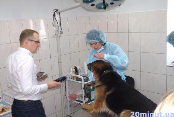 """""""Паспорт"""" для чотирилапого: вперше в Житомирі розпочалося чіпування безпритульних тварин"""