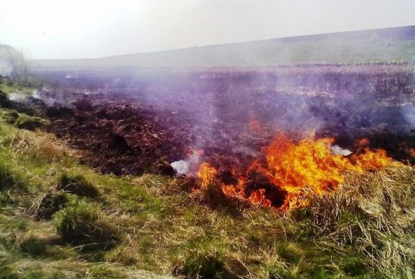 На Житомирщині за добу вигоріло понад 3 га сухостою: причини встановлюють фахівці