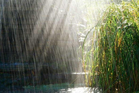 Сьогодні у Житомирі дощ