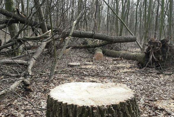 Поліція затримала підпільних лісорубів
