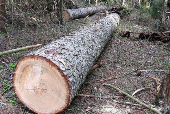На Житомирщині група підпільних лісорубів постане перед судом