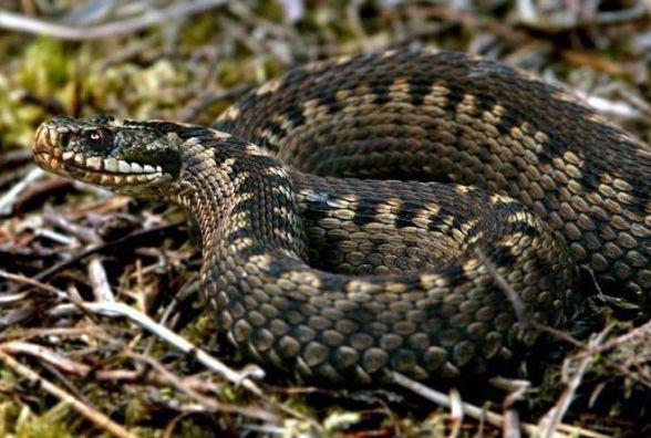 На Житомирщині зустріч чоловіка зі змією обернулася лікарняним ліжком
