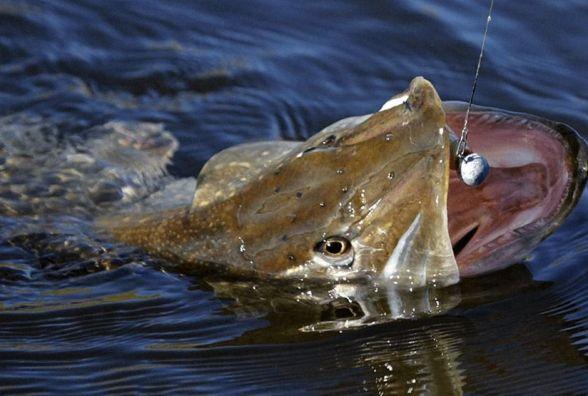 У Житомирі відбудеться Фестиваль ловлі хижої риби