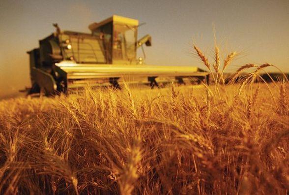 Жнива у розпалі: аграрії Житомирщини вже зібрали 7 тисяч тонн зерна