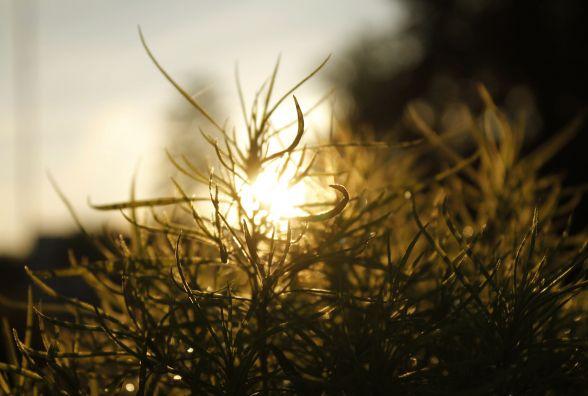 Починаючий  фотограф  показав красу житомирських світанків. Фоторепортаж