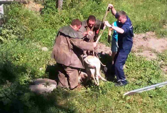 На Житомирщині МНСники врятували козу з каналізаційного колектора