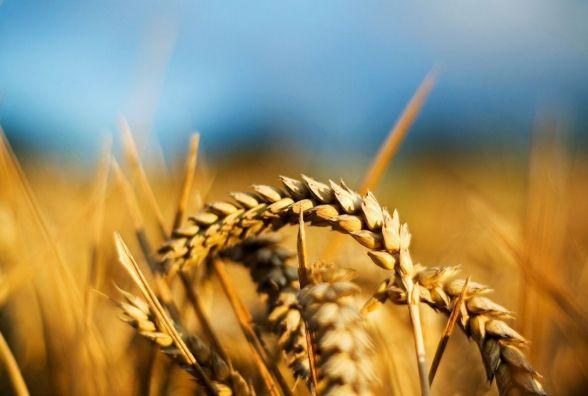 Як поділили бюджет-2018 та який «шмат пирога» дістанеться фермерам?