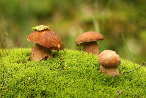 Житомирянам розповіли, як не отруїтися грибами