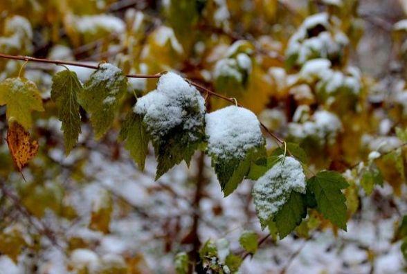 Погода у Житомирі