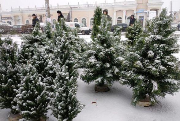 На Житомирщині лісгоспи вже реалізували 28 тис. новорічних ялинок