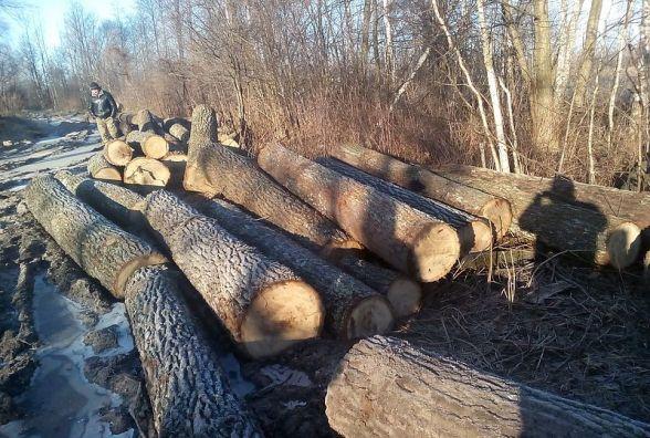 В Олевському районі лісова охорона знайшла 73 колоди дуба на дорозі