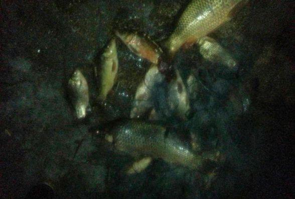 До півцентнера риби викрали двоє киян на Житомирщині