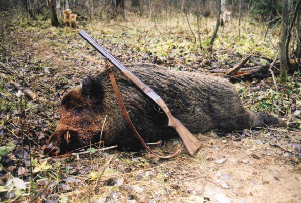 Сезон полювання закінчився, але не для браконьєрів