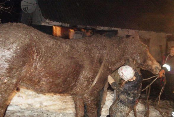 Житомирська область: рятувальники вивільнили з ями коня