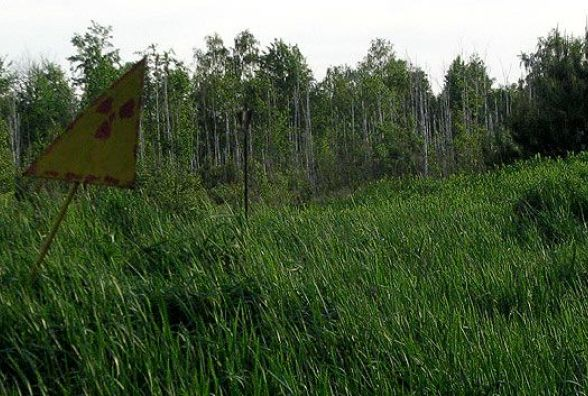 Лісівники констатують: площі «чорнобильського» лісу зменшуються