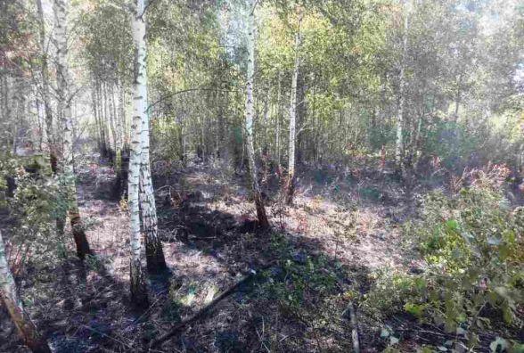 В Олевському районі ліквідували пожежу сухої трави, що загрожувала житловому сектору