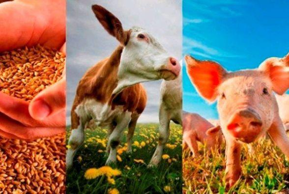 Житомирщина посідає 2 місце за виробництвом сільськогосподарської продукції