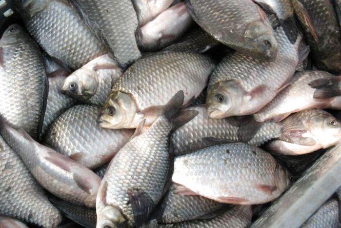 В Україні походження риби можна буде з`ясувати за допомогою електронного сертифікату