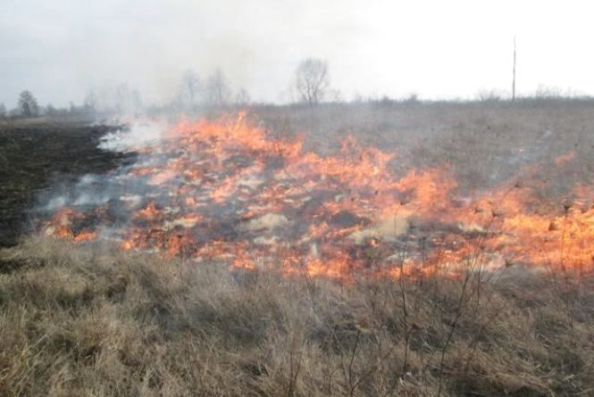 За добу на Житомирщині вигоріло 1,5 га сухої трави