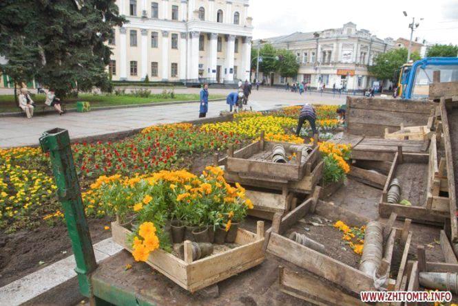 Весняний Житомир: які квіти та дерева прикрасять місто