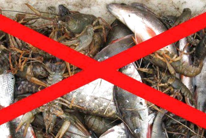 Увага! На Житомирщині тимчасово діє заборона на вилов риби і раків