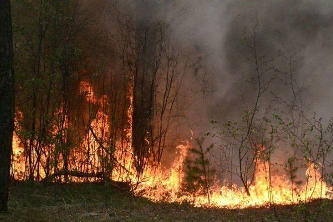 В Україні зросли штрафи за спричинення лісових пожеж