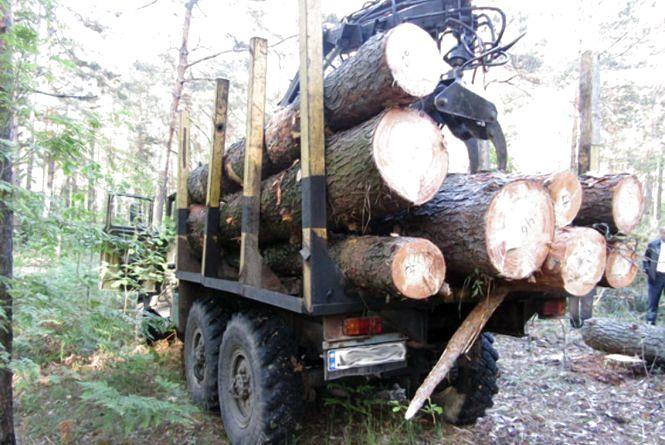 """На Житомирщині затримали п`ятьох """"чорних"""" лісорубів"""