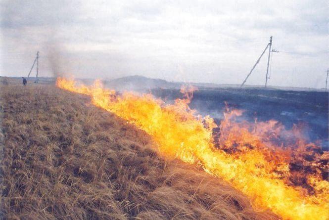 В області горить трава