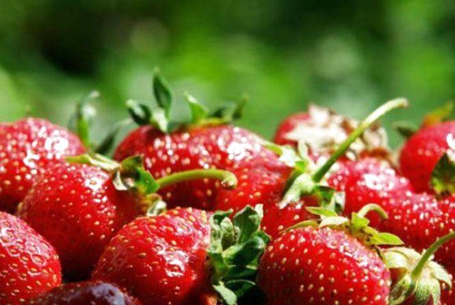 Україна встановила рекорд з експорту полуниці