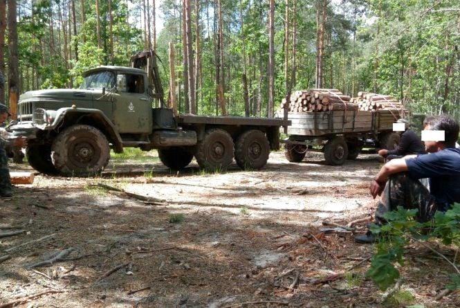 Прикордонники не допустили вирубку лісу поблизу державного кордону
