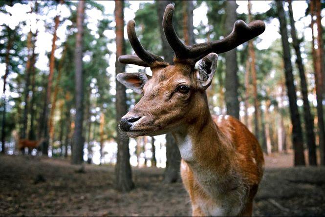 В Україні значно зросли суми відшкодування збитків за браконьєрство