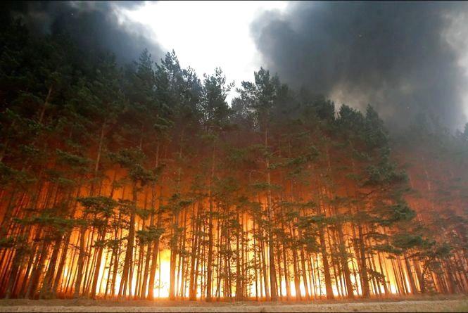 Жителів Житомирщини просять не провокувати пожежі в екосистемах