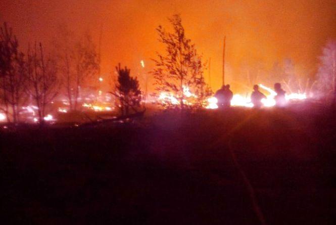 Масштабна пожежа в Олевському районі:  горить 120 га на території Поліського природнього заповідника. Фото