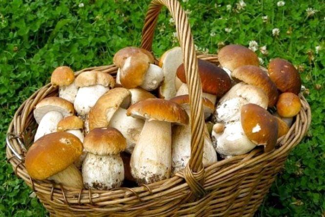 Жителям Житомирщини розповіли правила безпечного збору грибів