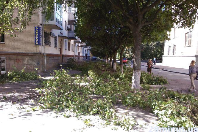 Фотофакт. У центрі Житомира комунальники обрізали гілки на деревах і не прибрали