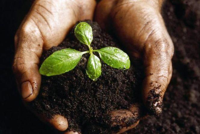 На Житомирщині фермер самовільно зайняв понад 87 га землі