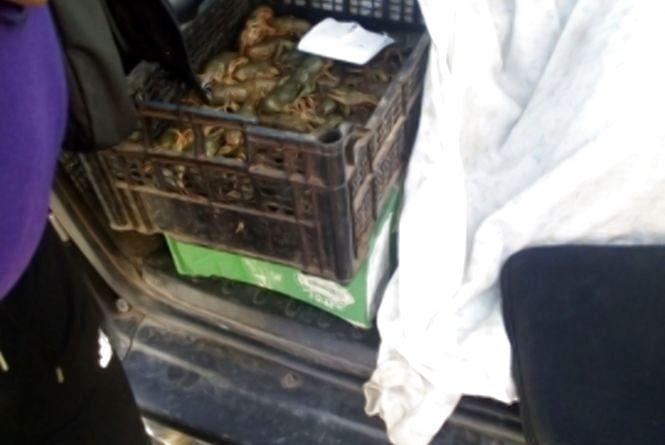 За минулий тиждень Житомирський рибоохоронний патруль вилучив 65 незаконних знарядь лову та 91 кг риби