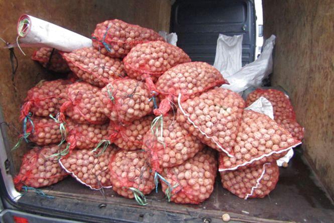 На Житомирщині два юнаки вкрали у пенсіонерки... 28 мішків горіхів