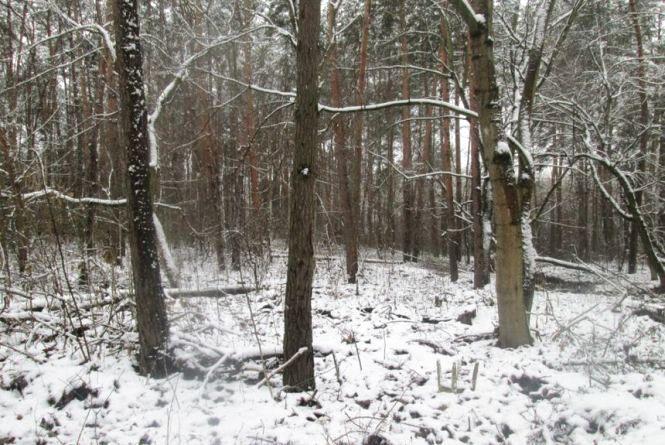 Житомирський виконком дозволив зрізати 221 дерево в районі Корбутівки