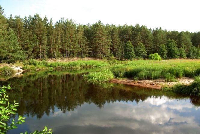 """""""Народицьке спеціалізоване лісове господарство"""" передасть 16611,3 га землі природному заповіднику """"Древлянський"""""""