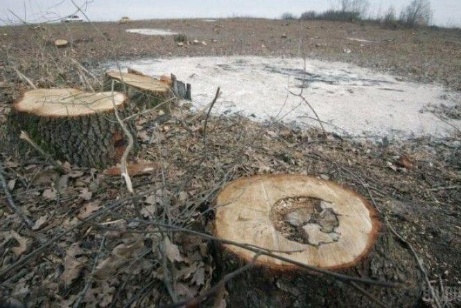 Троє мешканців Олевського району вирубали дубів на 96 тис. грн