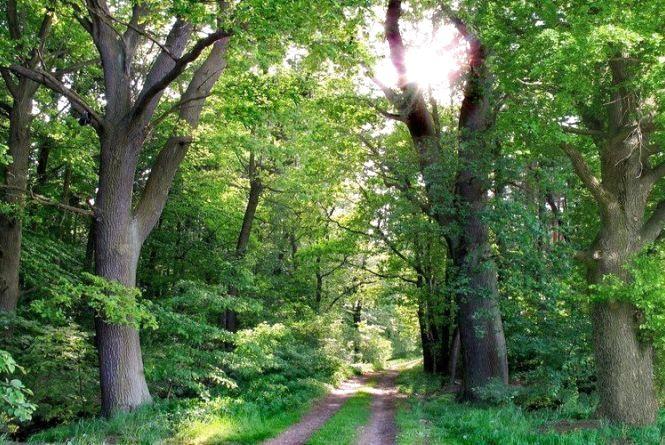 Сьогодні - Міжнародний день лісів