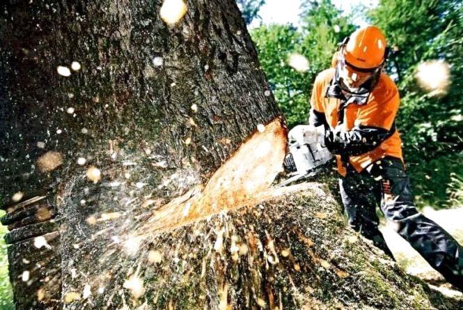 """На Житомирщині з початку року """"чорні лісоруби"""" зрізали деревини на півтора мільйона гривень"""