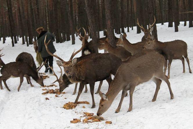 В лісах Житомирщини порахували звірів